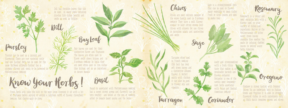 Herbs layout 01