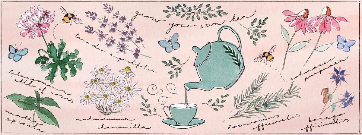 Grow your own tea composition3highres