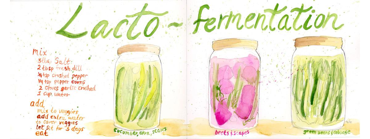 Lacto fermentation sml