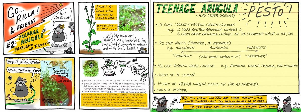 Adolescent arugula pesto 2