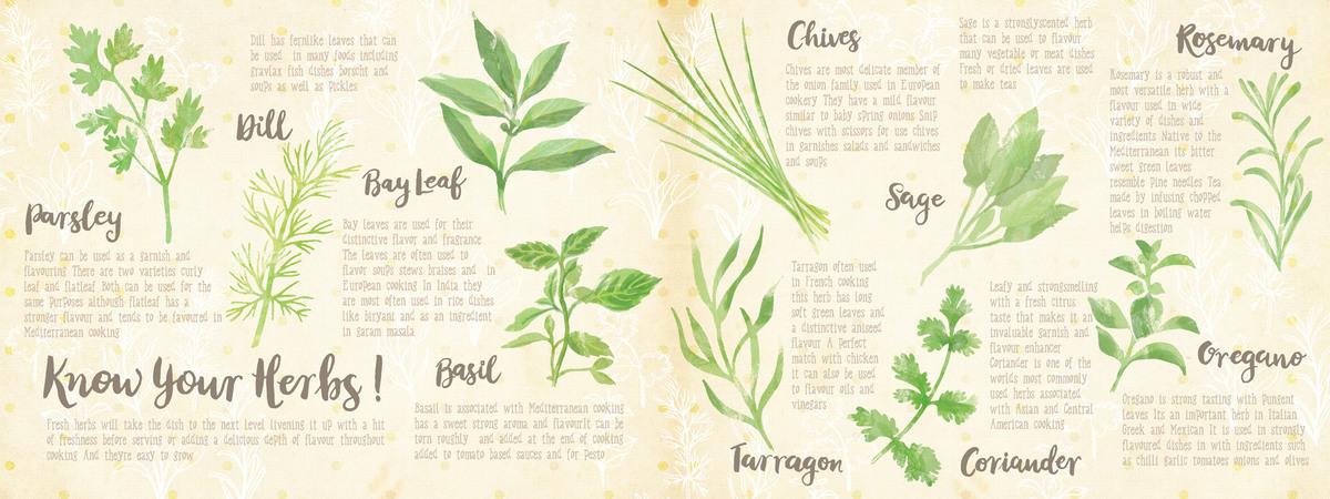 Herbs layout 01