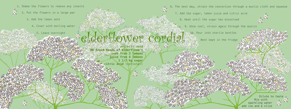 Elderflower cordial wendyhowarth