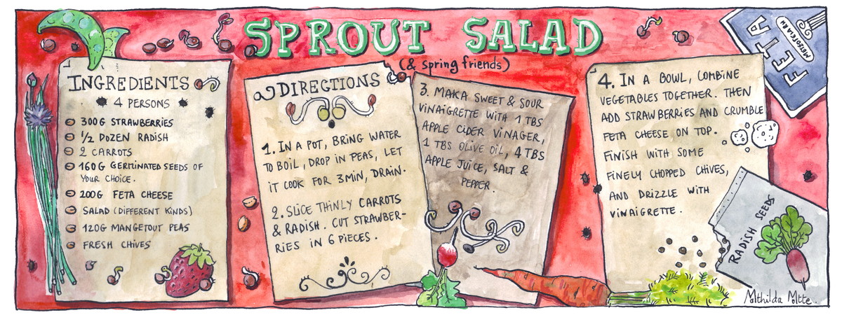 Sprout salad illu cookanddraw copie