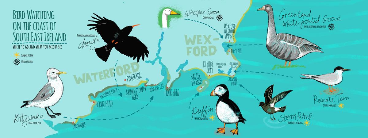 Seabirds se ireland