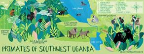 Katytanis primates sw uganda